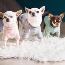szare błyskawice bluza dla chihuahua