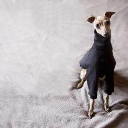 bluza dla psa