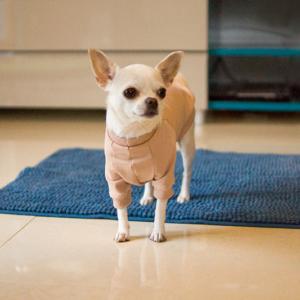 bluza basic beżowa chihuahua