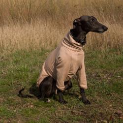bluza dla whippeta