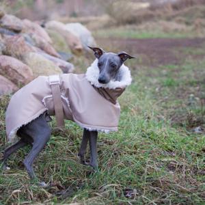 beżowa kurtka charcik włoski
