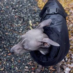 kurtka zimowa dla charcika