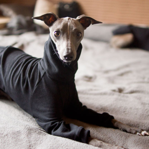 bluza czarna dla charcika