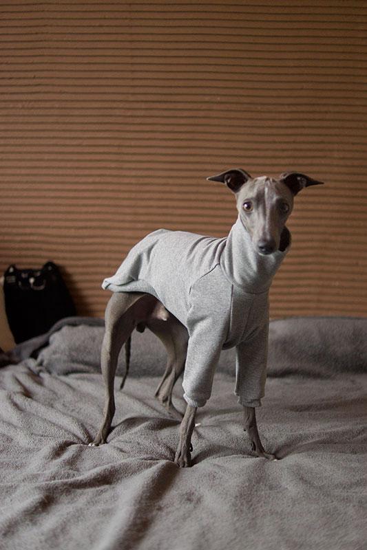 szara bluza dla psa