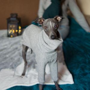 szary zimowy sweterek charcik włoski