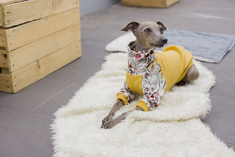 ubranko z nogawkami dla psa