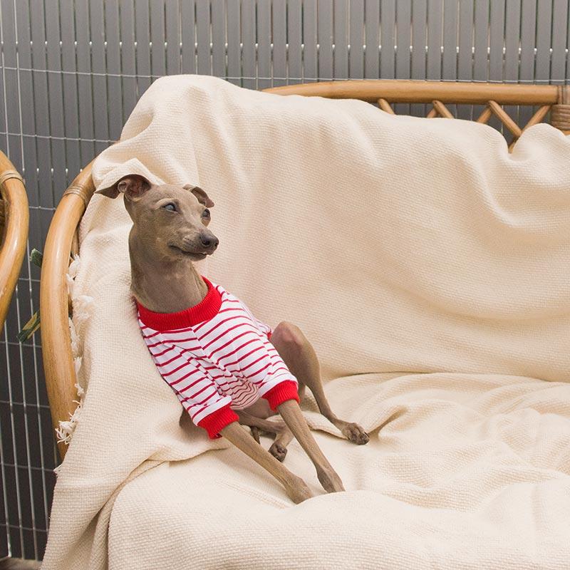 bluza w czerwone paski charcik