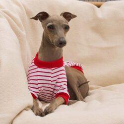 charcik bluza w paski czerwone