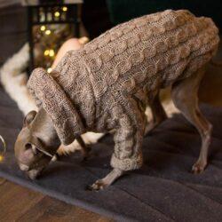 warkoczowy sweter dla psa