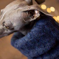 sweter z golfem dla psa