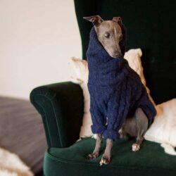 sweterek dla charcika włoskiego