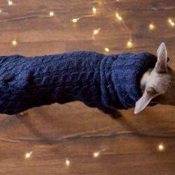 sweter dla psa