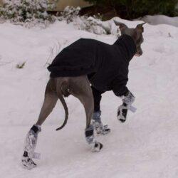 buty zapinane na rzep dla psa