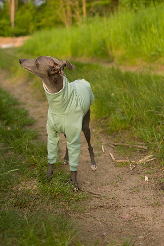golf dla psa
